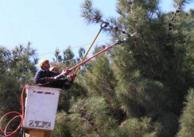 پرنده زدگی - شاخه زني با خط گرم