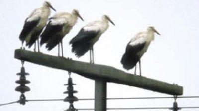 جلوگیری از پرنده زدگی