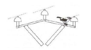 قرار گرفتن پرنده بين فاز و زمين