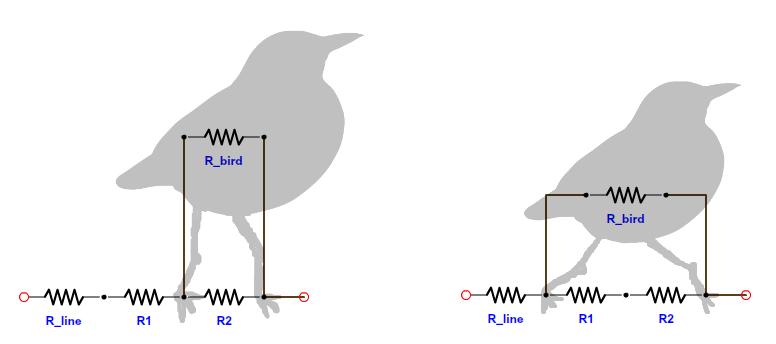 ماهیت پرنده زدگی در شبکه های توزیع برق