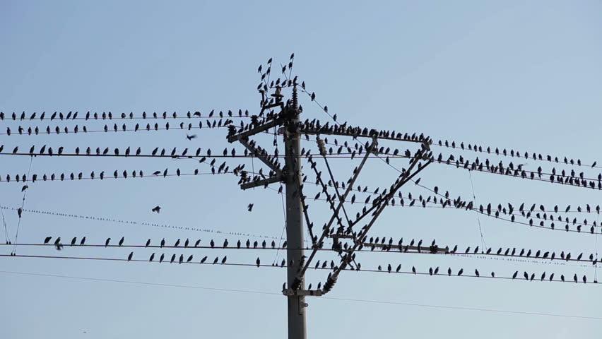 مشکلات ایجاد شده توسط پرندگان در شبکه های توزیع برق